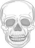 Crânio 1 Imagem de Stock Royalty Free