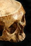 Crânio Imagem de Stock Royalty Free