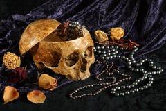 Crânio Fotos de Stock Royalty Free