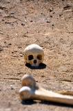 Crânio & fémur Fotografia de Stock