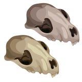 Crânio antigo de um animal pré-histórico Vetor ilustração stock