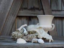 Crânio canino com vida do coquina & dos shell ainda Imagem de Stock