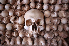 Crânio centrado em uma parede do osso fotos de stock