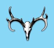 Crânio da montagem dos cervos de Whitetail e ilustração europeus dos chifres ilustração royalty free