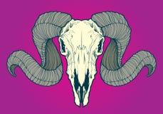 Crânio da ram Ilustração Fotografia de Stock Royalty Free