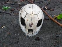 Crânio da tartaruga de mar imagem de stock
