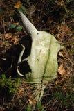 Crânio da vaca Fotos de Stock