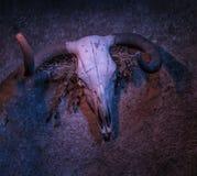 Crânio da vaca na obscuridade imagem de stock royalty free