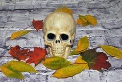 Crânio de Dia das Bruxas Foto de Stock Royalty Free