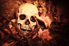 Crânio de Lightpainted Imagens de Stock Royalty Free