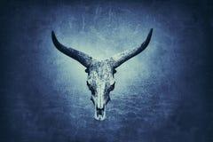 Crânio de Longhorn no fundo azul foto de stock
