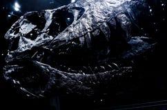 Crânio de Rex do Tyrannosaur na exposição Imagem de Stock