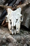 Crânio de uma cabra em uma rocha Foto de Stock Royalty Free