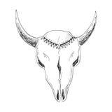 Crânio desenhado à mão do touro com ornamento nativo ilustração stock