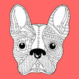 Crânio do açúcar do buldogue francês, dia de cão bonito dos mortos, ilustração do frenchie do vetor Imagens de Stock