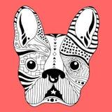 Crânio do açúcar do buldogue francês, dia de cão bonito dos mortos, ilustração do frenchie do vetor Fotografia de Stock Royalty Free