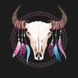 Crânio do búfalo com penas ilustração royalty free