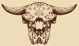 Crânio do bisonte Imagens de Stock
