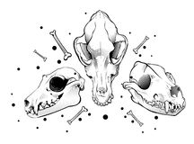Crânio do cão do vetor Estilo da gravura Fotos de Stock Royalty Free