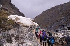 Crânio do cavalo em uma rocha nas montanhas fotos de stock