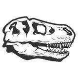Crânio do dinossauro de T-rex isolado no fundo branco Imagens para o lo ilustração royalty free