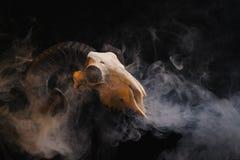 Crânio do Ram com os chifres no fundo fumarento Foto de Stock
