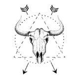 Crânio do touro com chifres ilustração do vetor