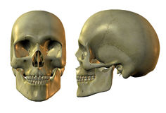 Crânio dourado ilustração royalty free
