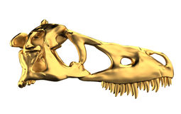 Crânio dourado de Dino Imagem de Stock