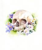 Crânio e flores Foto de Stock
