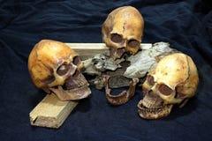 Crânio e madeira no fundo preto - ainda facas do clássico do estilo de vida Imagens de Stock