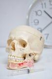 Crânio e medicina Foto de Stock