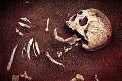 Crânio e osso imagem de stock