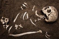 Crânio e osso Fotografia de Stock Royalty Free