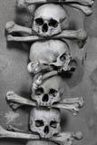 Crânio e ossos imagem de stock