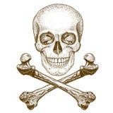 Crânio e ossos cruzados da gravura no fundo branco Fotos de Stock Royalty Free