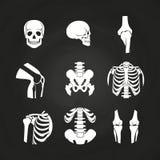 Crânio e ossos humanos brancos ilustração royalty free