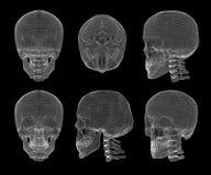 Crânio e vértebras cervicais Fotos de Stock Royalty Free