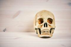 Crânio em um fundo de madeira Imagens de Stock