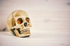 Crânio em um fundo de madeira Imagem de Stock Royalty Free