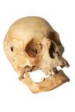Crânio humano Imagens de Stock Royalty Free