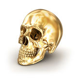 Crânio humano dourado sobre o branco Fotos de Stock