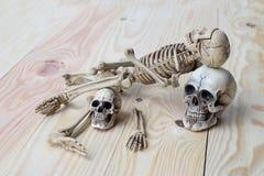 Crânio humano e esqueleto humano no fundo da madeira de pinho Fotos de Stock Royalty Free