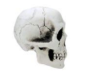 Crânio humano isolado no fundo branco Foto de Stock Royalty Free