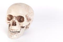Crânio humano no fundo branco isolado Imagem de Stock Royalty Free