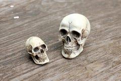 Crânio humano no fundo de madeira velho na natureza, ainda vida Imagens de Stock