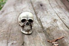 Crânio humano no fundo de madeira velho na natureza, ainda vida Fotografia de Stock