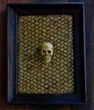 Crânio humano no quadro imagem de stock