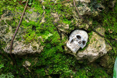 Crânio humano no recife com musgo Fotografia de Stock Royalty Free