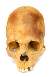 Crânio humano pré-histórico velho isolado Imagens de Stock